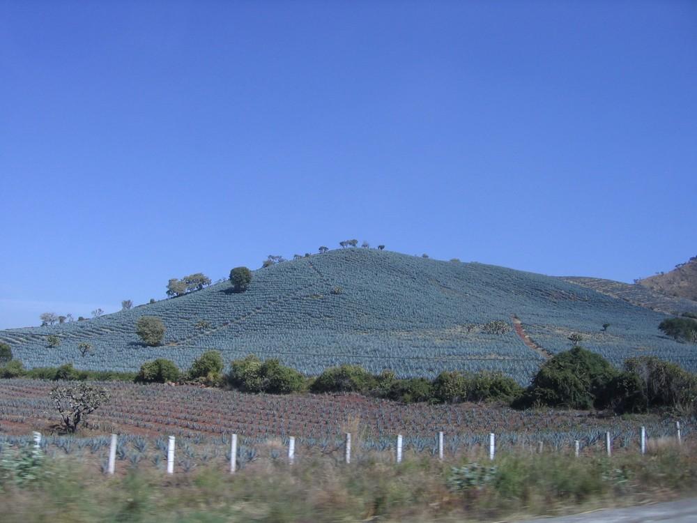 tequila_farm